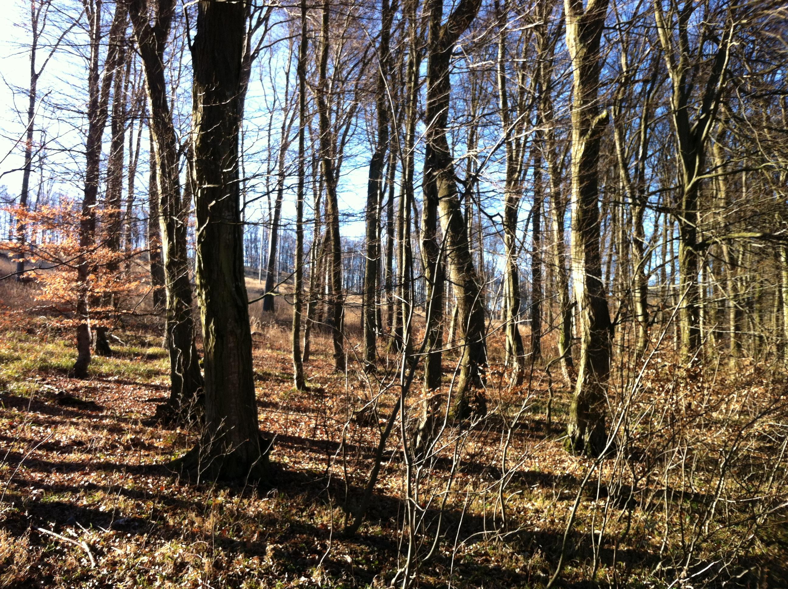 BratislavaMestské Lesy on Traja Krali (Three Kings' Day) (January 6th)
