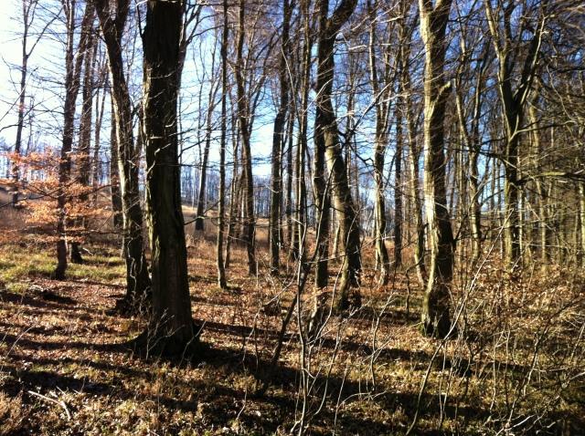 BratislavaMestské Lesy
