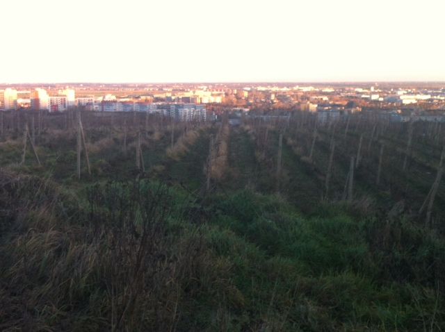 Vineyards, with Bratislava in the distance
