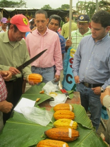 Cacao judging competition, Ecuador