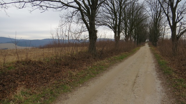 The path up to Villa Bacchus, where Beethoven once stayed… ©englishmaninslovakia.com