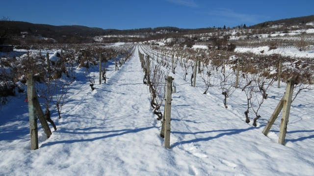 The vineyards above Pekna Cesta ©englishmaninslovakia.com